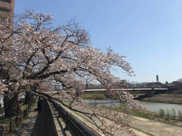 Sakura 2018
