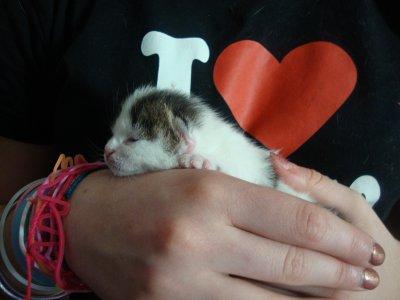 Un autre bébé chaton de mon chat