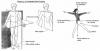 Pôle 1 : chapitre 1 : Anatomie du corps humain