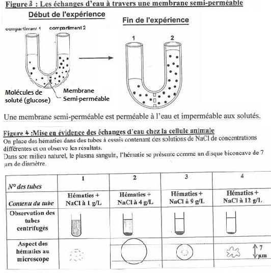 Pôle 1 : Chapitre 4 : La cellule : de l'ultra-structure au niveau moléculaire