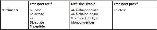 Pôle 2 : Chapitre 8 : L'absorption