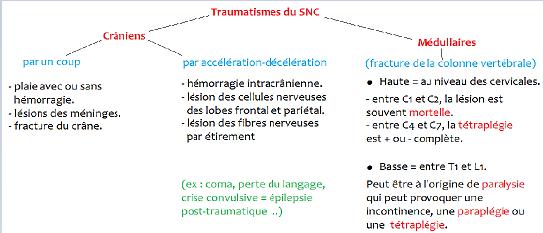 Pôle 3 : Chapitre 12 : Les techniques d'exploration et les pathologies associées au SN