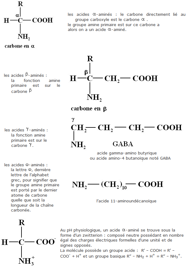 Chapitre 8. Les acides aminés