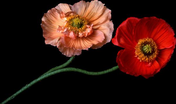mes amies et amis un jolie cadeaux pour vous et merci pour ces jolie coms car ces très gentil a vous et jespère que vous allez très bien et qu es ce que vous pense de mon blog et n oublièe pas votre cadeaux car il et jolie et ces pour vous et mercie d ètre mes amies amis dans ce blog et je vous fais des gros bisous ton ami bernard