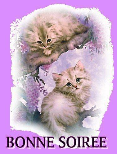 """Bonsoir (l) ________☼♥/)_♥☼♥_____☼♥./¯""""""""""""/') ¯¯¯¯¯¯¯¯¯\)☼♥¯♥☼♥¯¯¯¯☼♥'\_""""""""""""""""\).  Je viens te souhaiter une très bonne soirée et une douce nuit bercée de jolis rêves merci de tout coeur pour toute l'amitié que tu m'offres ________☼♥/)_♥☼♥_____☼♥./¯""""""""""""/') ¯¯¯¯¯¯¯¯¯\)☼♥¯♥☼♥¯¯¯¯☼♥'\_""""""""""""""""\). Gros bisous  (l)"""