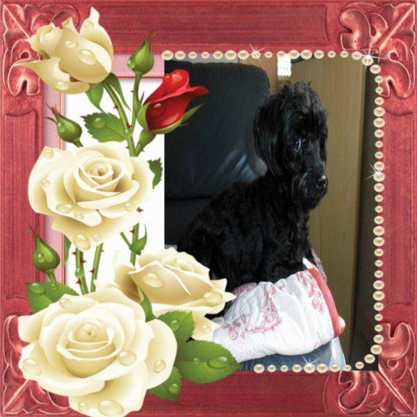 bonsoir je te remerci pour ce super cadeau pour ma petite chienne féline elle a été très contente pour ces cadeau que nous lui avons offert merci mon amie L-A-I-K-A je te souhaite une bonne et douce nuit gros bisous