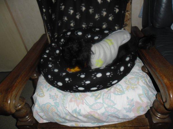je passe vous souhaitez une superbe nuit et aujourd'hui c'était l'anniversaire de ma petite chienne féline et oui 3 ans elle a été gatter je vais vous mettrent les photos trop belles
