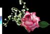 Bonjour.. Je te souhaite un excellent samedi. une agréable journée gros bisous de ton ami bernard car c est très beau l amitiè