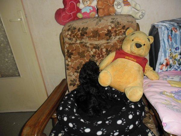 bonjour voici des nouvelles photos de ma petite chienne féline avec ces peluches elle es trop belle et la grosse peluche ces winnie l'ourson gros bisous a vous tous