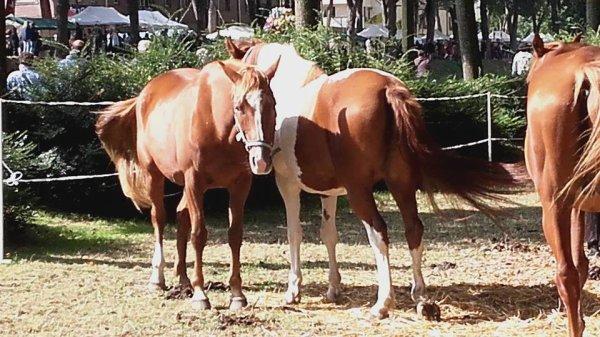 la suite des photos avec des chevaux que j aimeeeeeeeeeeeee