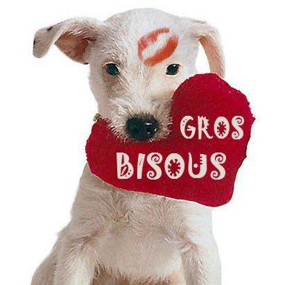 bonjour a vous tout et la une photo de ma petite chienne fèline bèbè avec ma fille que j aime gros bisous en vendredi gros bisous de ton ami bernard car c est très beau l amitiè avec vous tous