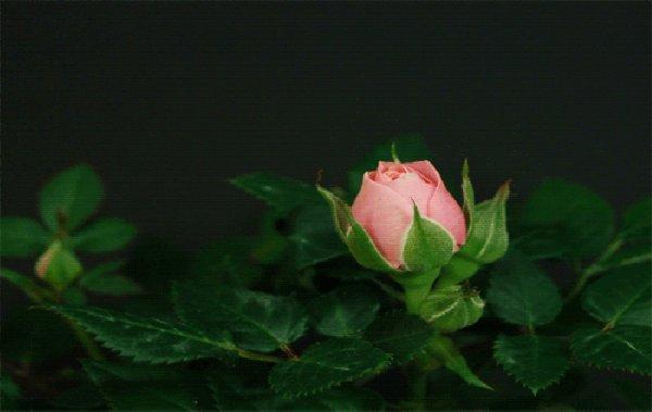 ★;) Bonsoir (l)(¯`✿´¯) 。 ☆ Je passe en douceur *✿* (l).`•.¸.•´  ☆  *✿* T'offrir un panier de fleurs *✿*    (l)(¯`✿´¯) ♥ ☆Pour égayer ton c½ur*✿*     (l)`•.¸.•´ ☆ Et colorer ta vie de bonheur *✿* (l)(¯`✿´¯) 。 ☆i *✿*passe une bonne soirée .(l)`•.¸.•´  ☆  *✿* douce nuit *✿*    (l)(¯`✿´¯) ♥ Bisous (l) *✿*    (l) `•.¸.•´ ☆