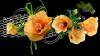 bonjour mon amie sylvie166 et merci pour ce joliie cadeau en ce lundi matin car j ai ètè très èmu et je te souhaite une bonne semaine et un bon lundi car ma rose elle travail j ai passèe un très bon week-end je te te fais des gros bisous de ton ami bernard car c est beau l amitiè