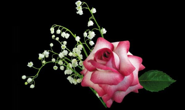 bonsoir mon ami didierravel je suis trop content pour ce sublime cadeau du 1er mai il est vraiment très beau je te souhaite une bonne fin de soirée et gros bisous a toi