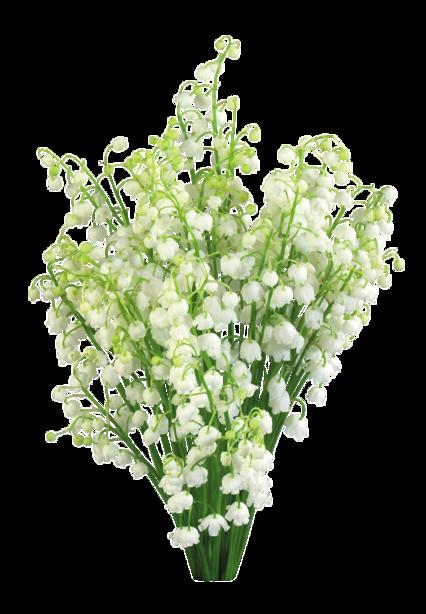 bonjour mon amie blanche628 et merci pour ce jolie cadeau du 1er mai il et très jolie que je l adore beaucoup et merci pour c est coms car c est très gentil et je te souhaite une belle journèe en ce jeudi et gros bisous de ton ami bernard car c est très beau l amitiè