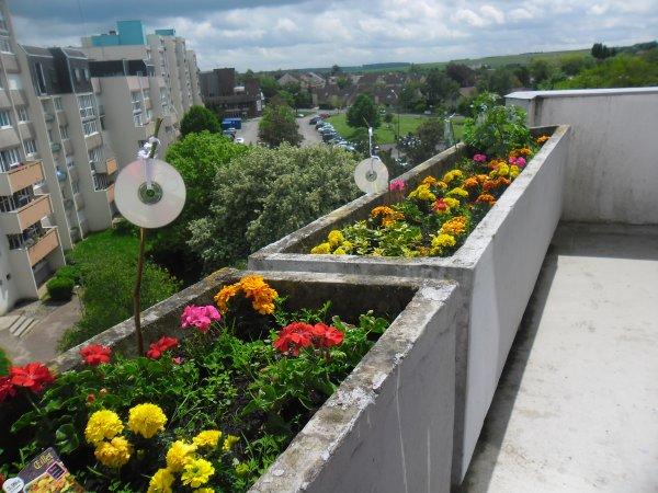 bonsoir mes amies et amis j espère que vous allez bien et voici des photos de mon balcon il et très jolie comme ça et je vous souhaitent un très bon week-end a vous tous et gros bisous de ton ami bernard car c est très beau l amitiè