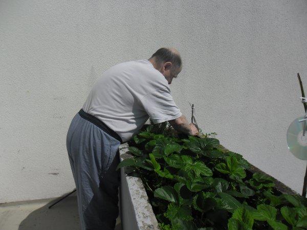 bonjour voici notre balcon les fraises commence a pousser nous avons mit des tomates cerise et d'autre choses et voici les photos et je vous souhaitent à vous tous une belle après midi avec le soleil en ce mercredi et gros bisous de ton ami bernard