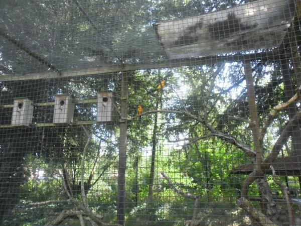 et voici les dernière photos du zoo c'était superbe et merci pour vos commentaires