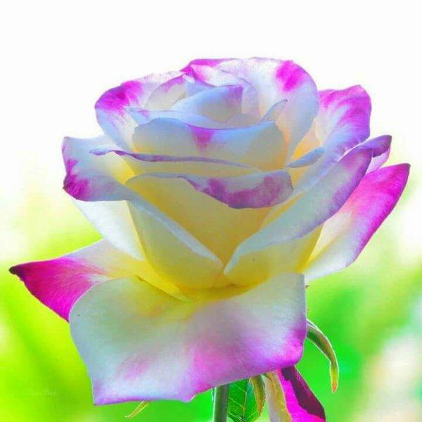 bonjour mes amies et ami j espère que vous allez bien et je vous souhaitent une bonne journèe a vous tous et voici un jolie cadeau pour vous tous en ce mardi matin et je vous fait des gros bisous a vous tous ton ami bernard