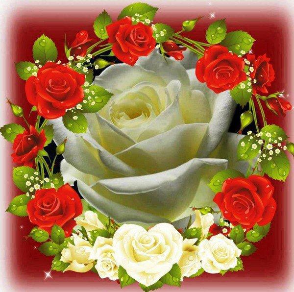 bonsoir ma rose d'amour pour ce sublime cadeau qui me fait trop plaisir et je tiens a dire bonsoir a mes amies et amis j'espère que vous avez passer une bonne journée je vous remercient pour vos coms et je vous souhaitent une bonne soirée gros bisous
