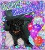 bonsoir mon amie sylvie166 pour ma petite chienne féline pour son anniversaire trop jolie le cadeau j'adore moi je te souhaite une très bonne soirée et je t'envoi des gros bisous
