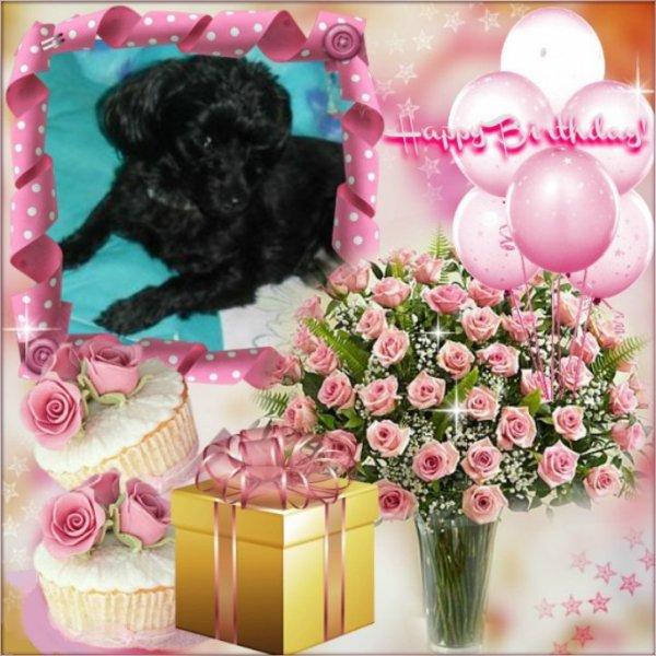 bonsoir mon amie CiscoO-bbey merci pour l'anniversaire a petite chienne féline elle est trop jolie dans ce montage j'adore je te souhaite une très bonne soirée et je te fais des gros bisous d'amitié