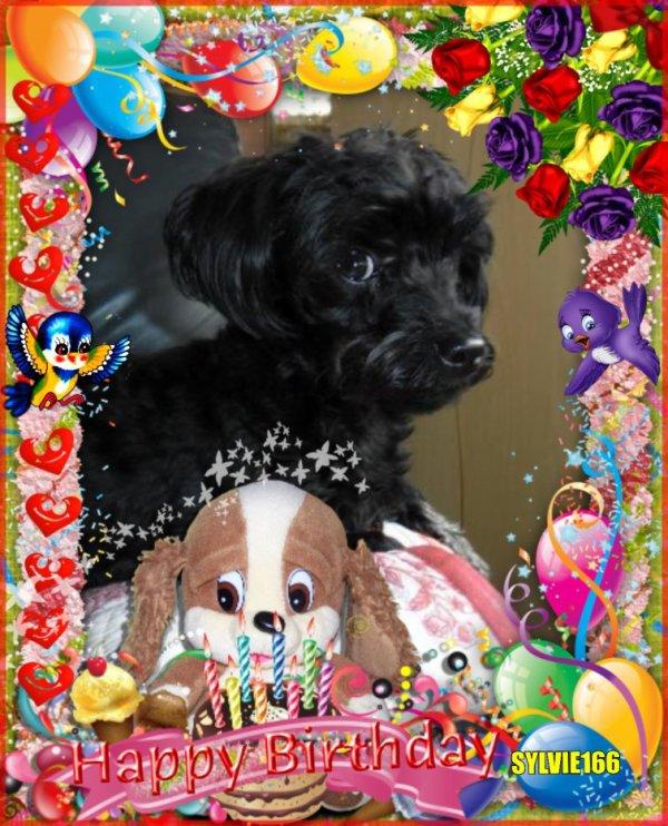 bonsoir mon amie sylvie merci pour ce sublime cadeaux d'anniversaire a ma petite chienne féline il est trop beau je te souhaite une bonne soiréeet je t'envoi tout plein de gros bisous
