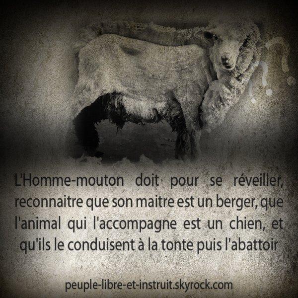 Le réveil de l'Homme-mouton