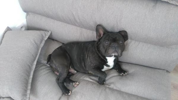 Ma fille a acheté un canapé à son Trésor , elle l ' a installé dans sa chambre .. MDR