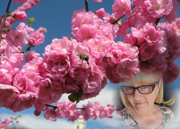 Je vous souhaite un bon dimanche avec ce petit air de printemps....