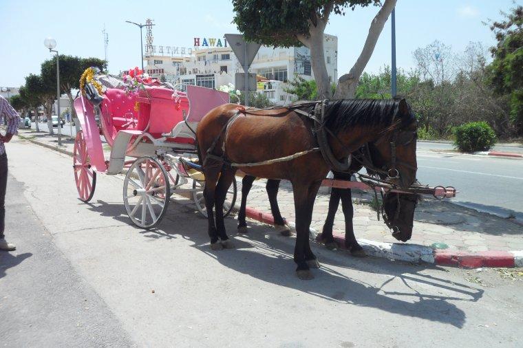 super vacances en Tunisie , promenade en calèche....