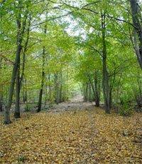 L'Arc boisé (Forêt Notre-Dame, Grosbois, la Grange)