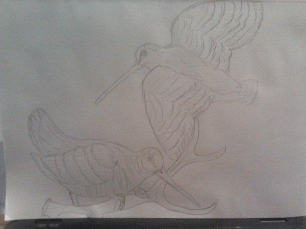 mes premieres bécasses au crayon à papier