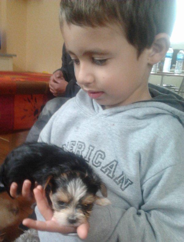ma petite chienne Héclipse et mon filleul