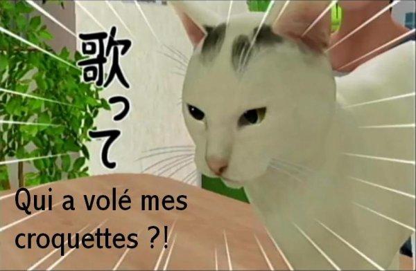 Le chat le plus kawaii quand il est en colère X)