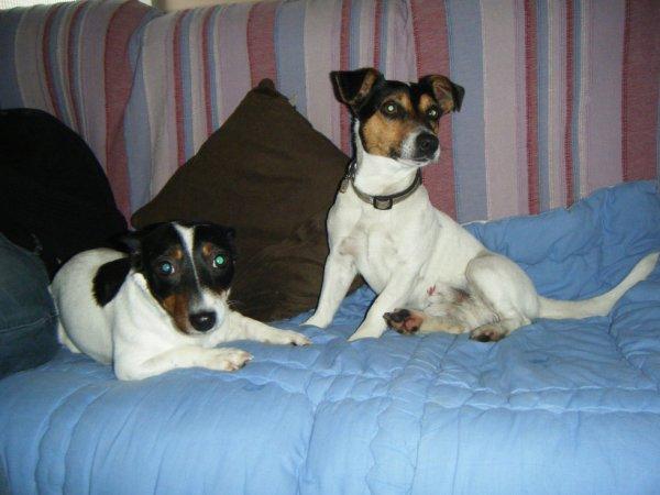 Ferdgie et F.Zeus
