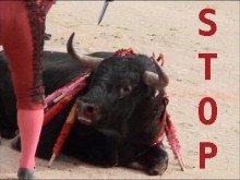 La torture tauromachique a-t-elle sa place au sein du patrimoine culturel français ?