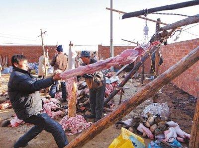 Pétition contre l'exploitation de fourrures animales