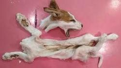 Bring Animal Killing Artist, Katinka Simonse To Justice