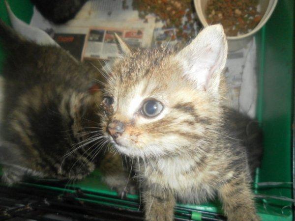 eutha demain matin le 4 mai pour 10 petits chatons en fourriére dans le 62