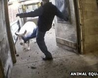 Farm Animals Kicked and beaten to death