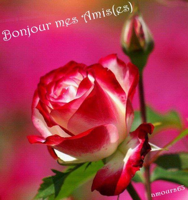 Bonjour bonne journee et tres bon dimanche a tous mon for Fleuriste dimanche