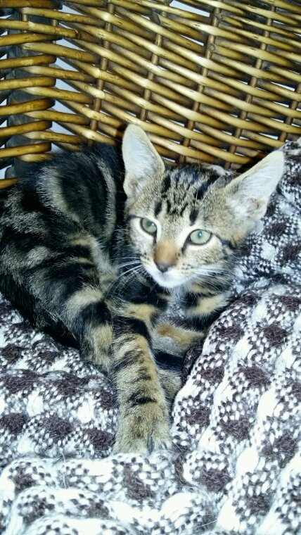Donne chaton 2 mois Amiens