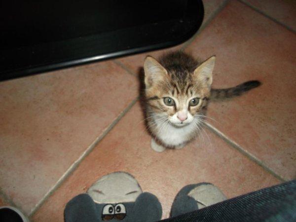 mon chat !!!