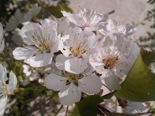 Le printemps arrive à grands pas !