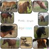 poney-club-equiloisirs