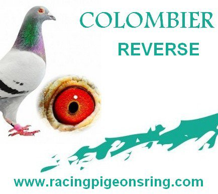 Blog de colombierREVERSE