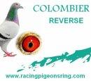 Photo de colombierREVERSE