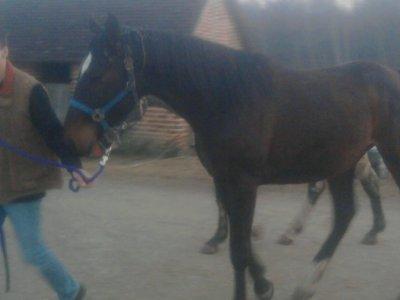 Février 2012 Apoline et Avalanche du Castel à 2 ans