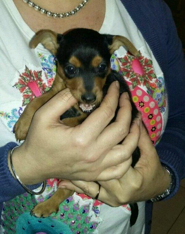 Nina mon bébé d'amour